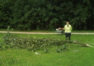 Fallen branch in Millennium Park